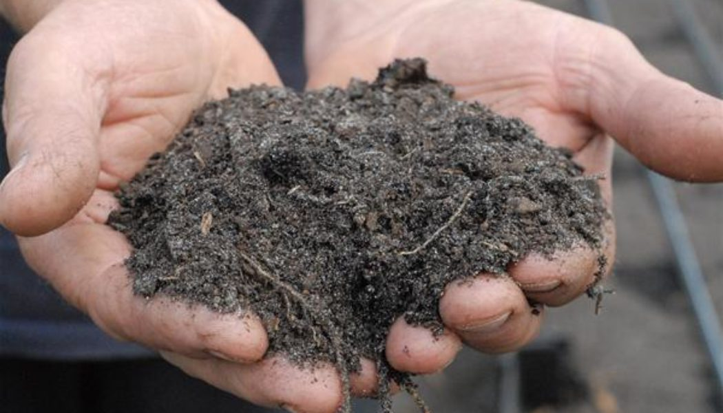 Healing the Planet – Soil, Carbon and Human Intervention